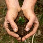 hands-soil-150