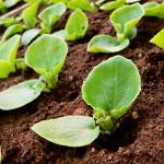 seedlings-150