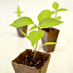 seedlings-250