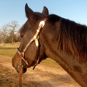 Horse poo & bedding